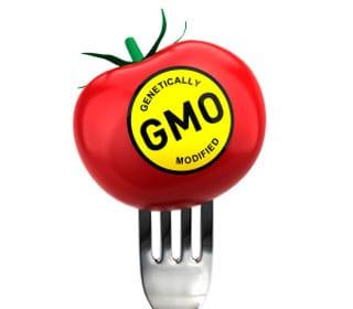 GMO Update